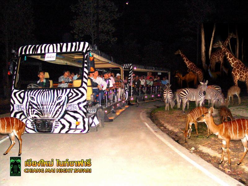 Tram_Night Safari_2_resize